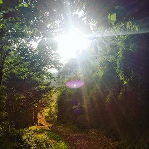 Masih dalam tema ijo ijo ulet keket.Cahaya Ilahi. Message from Mother Nature: Don't leave anythings behind except the footsteps.......#shortescape #whatjakartaneeds #escapefromcitylife #morningclimbing #bactonature #mothernaturerocks #waytoheaven #cahayailahi #lighting #tiktok #clozetteid #travel #kebonrayacibodas #forest #nationalgarden #wonderlust #weekendlist #ootd #cloud9 #throwback #ggrep #travel #adventure #wanderlust #vacation #travelgram #explore #holiday