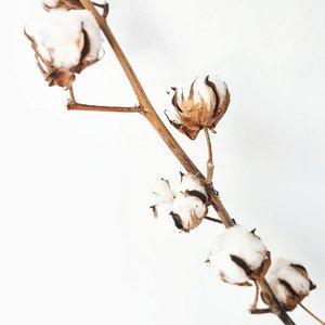 Morning! What shall I make of this gorgeous #cottonflower ? 😍 • • • • • • • • • • • #ootd #clozetteid #clozetteco #ootdshare #aboutalook #ootdindo #lookbookindo #lookbook #stylista #outfitinspo #vsco #mommyandme #momstyle #mommyblogger #momfashion #fashionkids_and_moms #todayimwearing #casuallook #fashionpost #styleoftheday #ilovefashion #kinfolk #livefolk #livefolkindonesia #foliage #flowerpower #flowerporn #flowerofinstagram #flowerlover #