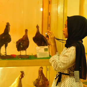 Hellooo Chickens! 🐔🐔🐥🐓..At the museum of biology..Iphone' case: @davinstorebdg ..#museumtrip #exploremuseum #biology #animals #learning #outfit #ootd #phonecase #camera #clozetteid #abmtravelbug #ifbootd #explorejogja #polkadots #livefolk #hijabstyle #lifeiscolorful