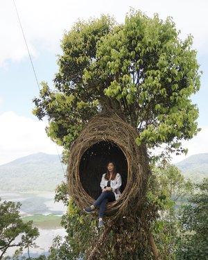 Lagi hobi maen jadi anak burung.. Jangan tanya cara naik ke sarangnya.....#bali #balidaily #baligasm #baliindonesia #balilife #visitbali #clozetteid #wanagiri #bedugul #nature #wonderfulindonesia