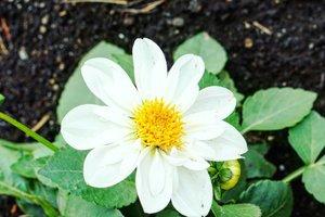 White flower for your Monday.Fresh, clean, and purify your mind.#whiteflower #flower #white #love #beauty #garden #clozetteID #monday #hello #beautiful #Japan #summerflower #summerholiday #kindness