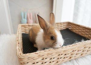 Happy 4 almost 5 months old Crunchy June, Krispy Creme, apapun panggilan namamu yang dikasih sama berbagai macam orang dirumah ini...😄 Makin gendut, makin lincah, n makin mau dipanggil ya, jangan kabur-kaburan mulu, susah tau nangkepnya.#clozetteID #rabbit #bunny #netherlanddwarfrabbit #netherlanddwarf #pet #cutenessoverload #bunnies #cute
