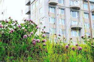 Wild flowers.Biar wild, tapi tetap cakep, kaya kamu meski ga dandan..... #beauty #summerholiday #traveldiary #summerflower #summerinJapan #flowers #wildflower #traveling #japan #greens #clozetteID