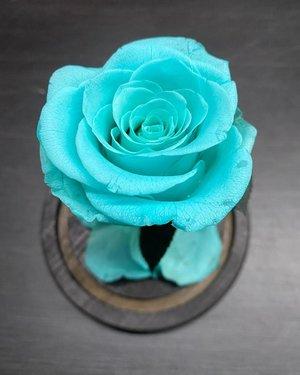 A single blue rose. #blue #rose #bluerose #valentine #flower #love #beauty #clozetteid #beautiful #igstyle #igbeauty #potd #photography #photooftheday #rosepetals