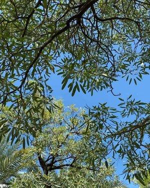 🔊Sound on to enjoy the beautiful morning music from nature. #nature #beauty #sound #music #birds #trees #morning #goodmorning #morningsound #soundsofnature #clozetteID #igdaily #dailylife #dailyinspiration #tropical #tropicalvibes #instadaily #instanature #instagram #instagood #hello #howareyou #Jakarta #plants