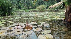 Warga Bogor harus senantiasa bersyukur karena kalau mau menikmati 🌿🌱🍀 mudah banget! Satu pesan buat semua pengunjung Kebun Raya Bogor, dirawat mulai dari buang sampah pada tempatnya! ......#ClozetteID#wheninBogor#visitBogor#greenery#BogorBotanicalGardens#fromwhereistand#instadaily#instagood#moodygrams#whileinbetween