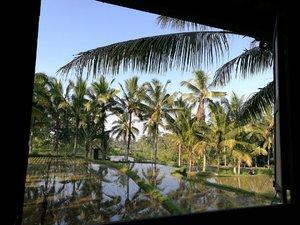 Good Morning from Hati Padi 💗☕️ . . . . #hatipadiubud #exploreubud #sofiadewitraveldiary #clozette #clozetteid #lifestyle #weekend #weekendgetaway