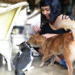 Tinggal di Hati Padi - Ubud dan takjub seru melihat Michelle (kucing) dan Jackie (Anjing) 💗 mereka aja bisa akur.. padahal (katanya) musuhan.. kepentingannya sama .. menemani tamu dan owner di cottage.. kita semua pasti juga bisa.. . . . Sampai ketemu lagi, Jackie and Michelle.. . . . #SofiaDewiTravelDiary #clozetteid #hatipadi #ubud #exploreubud #ubudpet #leica #leicalenses #travelling . . Thanks 💗 for the pic