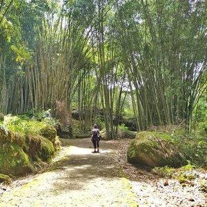 Sudah mau pulang .. 😣  Semoga bisa jumpa lagi ya Hutan Bambu To'kumila Sesean Suloara .. 😍 #clozetteid #torajamelotravel #lifestyle #travel #wanderlust #staywander #bambooforest #exploretoraja #visittoraja @torajamelo @visittoraja @seni_toraja #rentacXToraja #clozetteco #soulfultravel #travelgram
