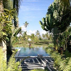 Random banget pagi2 inget Hati Padi ♥️ ... . . . Eco cottage di Ubud Bali ini memang ngangenin banget! dikelilingi sawah .. serba hijau.. healthy food.. ada kucing dan anjing yang hidup rukun. Sampai lupa kalau ini alam nyata.. 😂 . . . Selamat pagi!! ♥️♥️ #clozetteid #lifestyle #hatupadicottages #explorebali #exploreubud #throwback #sofiadewitraveldiary #traveller #leica #leicalense