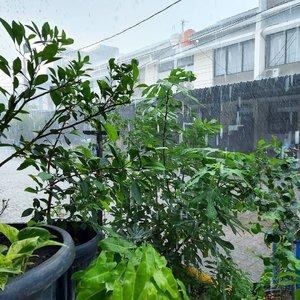 Hujan dipagi hari tuh selain adem, dan laper, juga bikin happy karena tanamam diluar ga perlu disiram 😚Untuk kalian yang akan beraktifitas keluar rumah, jangan lupa bawa payung dan jas hujan ya.. Happy Tuesday.. #rainyday #rain #morningview #morningsky #clozetteid