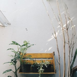 [MENYELAMATKAN KELOR SEKARAT].Ranting kering sebelah kanan itu pohon kelor. Tadinya pohon ini ada di rumah mertua sebelah rumah. Tapi krn rumahnya sering kosong, taneman jadi jarang disiram. Biar gak keburu mati, pakdim mindahin kelor yg tinggal batang doang ini. Setelah beberapa hari disiramin, syukurnya mulai nongol daun baru 😚.Selamat aktifitas mak 🌵.#plantsofinstagram#houseplantjournal#plantsmakepeoplehappy#clozetteid#zerowasteindonesia#houseofplant#DimasDewiNanem