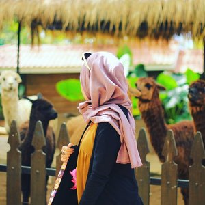 Nesa Fans Club 🐪 #Alpaca . . . . . . . .  #park #travelblogger #blogger #green #nature #malang #igers #bestoftheday #indonesia #likeforlike #like4like #hijab #outdoors #photooftheday #photography #picoftheday #vsco #vscocam #girl #tbt #zoo #throwbackthursday #animal #throwback #traveling #clozetteid #ootd