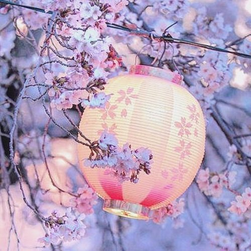 This pic have my two fave color.Purple and pink. 😭😭😭so beautiful #さくら🌸  #lantern #purplepink #lfl💛 #clozetteid