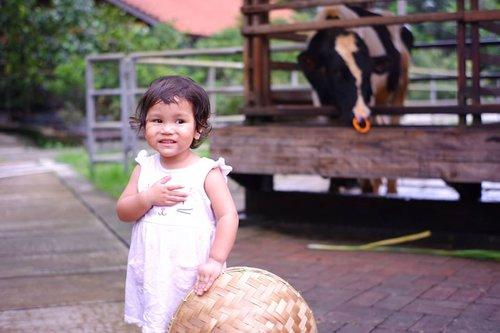 Eh kaget-kaget. ... suara moo sapi mengagetkan ku mamih (Kata Qina) 🤣btw, dari foto ini 99% mirip papap nya dan 1% nya rambutnya rambut akuh 🤣😍Alhamdulillah yaahh sesuatuuuuu....masih ada yang mirip sama mamih 😘Captured from @librananta 💙#mybabygirl#Clozetteid #mydaughter#lovefamily