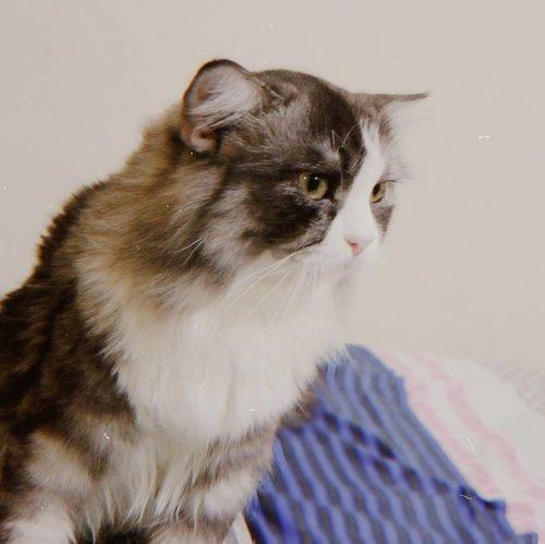 Kucing sok ganteng 😆 #keeo #clozetteid #cats #catsofinstagram #cat  #catstagram  #catlover #catlovers #instacat #meow #catlife #pets #kittens #kitten #kitty #catoftheday  #adoptdontshop #lovecats #cutecats #petsofinstagram #catsagram #bhfyp