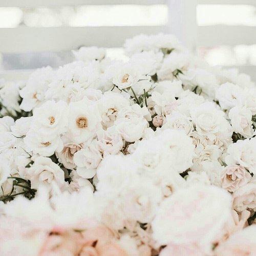 #mood  #flowers #garden #beauty