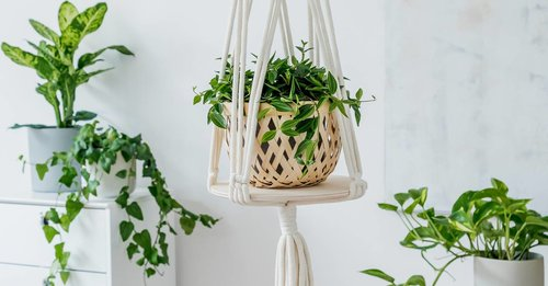 11 best hanging plants to decorate your home with (that won't die within days)