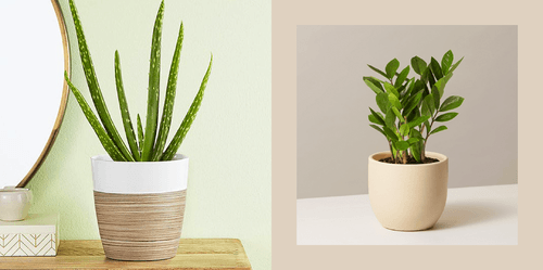 Things That Exist: Indoor Plants That Don't Need Much Sun and Are Perfect for You