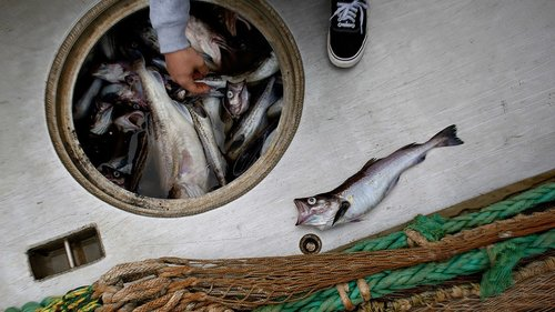 The Sustainable Seafood You'll Soon Be Seeing Everywhere
