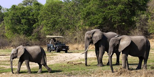 Your Ultimate African Safari Guide