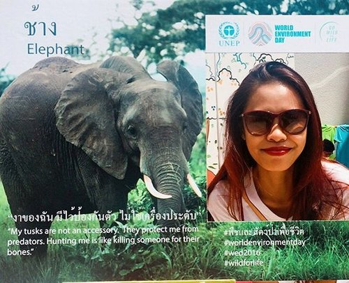 Still from the World Environment Day 2016 this morning.  Say NO to Ivory poaching, Elephant ride or Elephant circus! Lets elephant be elephant!! WILD FOR LIFE ❤️ #blogger #fblogger #travelblogger #beautyblogger #lebe #indonesianlivinginbangkok #starclozetter #clozetteid #WED2016 #worldenvironmentday #wildforlife #bangkok #thailand #letselephantsbeelephants