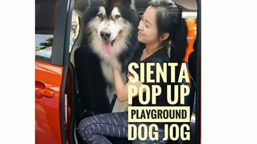 Here's the video of Sienta Pop Up Playground Dog Jog💖💖 Look how much Kenzo @kenzothemalamute loves @toyota.id Sienta!! There's also this cute Bruno @brunotheadventurer taking pictures in front of Sienta😆😆 . Check my youtube channel to see full video (click the link in my bio) . Check out their posts as well❤❤ : @makeupwithselly @miradamayanti  @aliciaatheng  @feliciamarcellina . @beautynesiamember #popupplayground #unlockyourplayground #mysienta #beautynesia #beautynesiaxtoyota #beautynesiamember #doglover #instadog #like4like #instafollow #instalike #instaphoto #instadaily #clozette #clozetteid #dogsofinstagram #dogevent #cutedog #dogjog #petsdaily #petstagram #petslovers