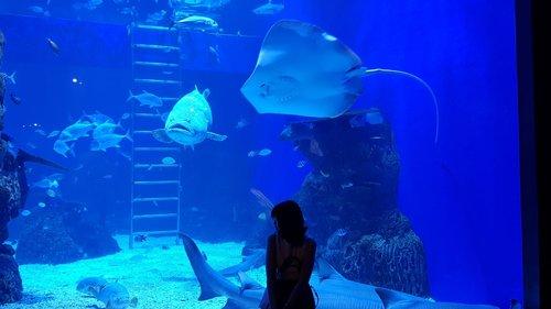 http://www.stephaniesjan.com/2020/01/jakarta-aquarium.html