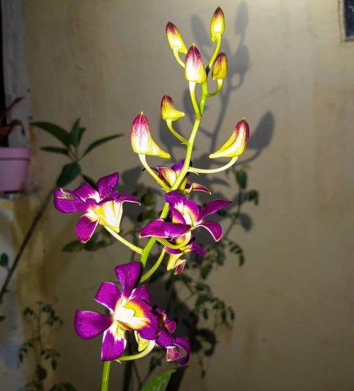 Mulai merekahhh 😍My dendroooooo 💖.....#orchids #bunga #minigarden #tanaman #nature #igersasia #travelerblogger #womanlifestyle #ritystory #travelerlife #travelgram #womanblogger #igersindonesia #gallery_of_all #belajarmenanam #girlexplorer #clozetteid #mygallery #sonyxperia #homegarden #urbangarden #instagarden #womenwhoexplore #rityminigarden #berkebun #flower #anggrek #dendrobium