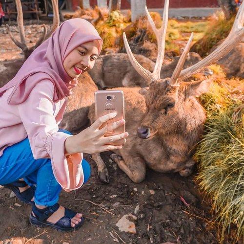 Deer wishper🦌 Safari date(?) With @real__pcy hahahaha😅. Lama juga ya gak jalan-jalan🗺🏕..#clozetteid #rancaupas #rusa #deer #rancaupasciwidey #lifestyleblogger #lifestyle #farm #deerwhisperer #travelblogger #travelling #ootd #블로거#얼짱#라이프 #스타일 #블로거#ライフスタイルブロガー#ブロガー#かわいい#旅行#旅行ブロガー#여행#여행자#여행스타그램 #hunnyeo #훈녀