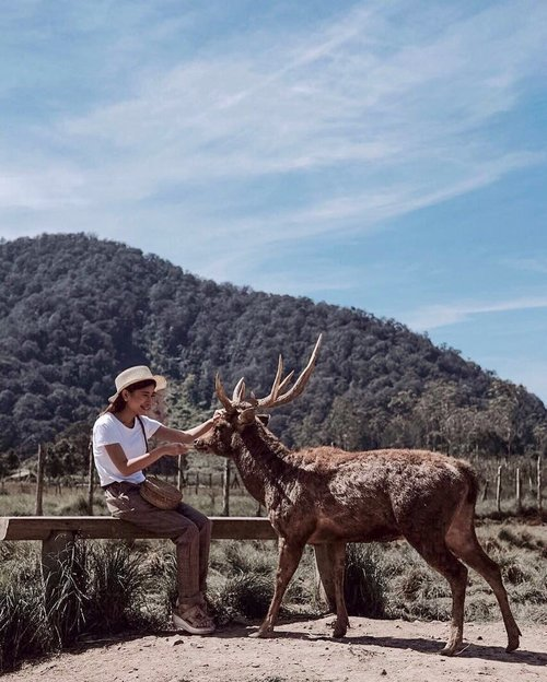 Sharing stories with nature is very beautiful 🦌✨..📷: @chrstiaan_ .#explorebandung #exploreindonesia #wonderfullindonesia #pesonaindonesia #rancaupas #ootdstyle #style #styleblogger #ootdindo #fujifilmxt20 #pursuitofportraits #ggrep #clozetter #clozetteID #tribepost #fashionblogger #bloggerstyle #bloggerfashion#bloggermafia #ootdfashion #ootdstyle #influencer #influencerstyle #charisceleb #indobeautygram