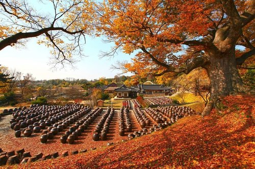 .Sebelum tidur aku teringat musim gugur yang selalu membuat aku terhibur :).Myeongjae House is pretty all year round, but it's most colorful during autumn! 😍🍂 .Where: 50, Noseongsanseong-gil, Nonsan-si, Chungcheongnam-do💻 https://t.co/H0jAmwh2jI.#VisitKorea #ourheartsarealwaysopen #travelkorea #throwback #autumn #myeongjaehouse #gyeongju #koreawellness #southkorea #akudankorea #kekoreaaja #ktoid #wowkoreasupporters #workwithhappy #playwithhappy #neverstopplaying #dearbeautylove #clozetteid #loveyourself #speakyourself #neverafraid #changedestiny #daretobedifferent #ajourneytowonderland #like4like #november #2020