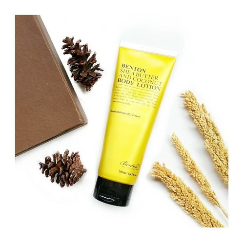 """<div class=""""photoCaption"""">The very first body lotion from @bentoncosmetic 🎉---⭐ RATING = 3.5 out of 5---🏝️Packaging:Housed in a golden yellow big tube, it's sturdy but not something that I would bring for traveling--🏝️Texture & scent:The texture is light, not too creamy or watery...the texture is just right for me who live in a humid country because this body lotion doesn't feel 'melted' on my skin during midday. The lotion color is white-yellowish with a soft coconut scent. So in my opinion, everyone can use this regardless of gender--🏝️When/How I use this:After bath morning and night, when my skin still damp--🏝️My thought:This body lotion leaving my skin smooth, nourished and moisturized without feeling tacky. So far it's a good product no bad reaction on my skin, but I don't find this amazing. ---Gifted by Benton for review purpose. Many thanks 🙆 ✨✨✨✨✨✨  <a class=""""pink-url"""" target=""""_blank"""" href=""""http://m.clozette.co.id/search/query?term=benton&siteseach=Submit"""">#benton</a>  <a class=""""pink-url"""" target=""""_blank"""" href=""""http://m.clozette.co.id/search/query?term=bentoncosmetic&siteseach=Submit"""">#bentoncosmetic</a>  <a class=""""pink-url"""" target=""""_blank"""" href=""""http://m.clozette.co.id/search/query?term=indirads&siteseach=Submit"""">#indirads</a> <a class=""""pink-url"""" target=""""_blank"""" href=""""http://m.clozette.co.id/search/query?term=kbeauty&siteseach=Submit"""">#kbeauty</a>  <a class=""""pink-url"""" target=""""_blank"""" href=""""http://m.clozette.co.id/search/query?term=kbeautyunicorns&siteseach=Submit"""">#kbeautyunicorns</a>  <a class=""""pink-url"""" target=""""_blank"""" href=""""http://m.clozette.co.id/search/query?term=clozetteid&siteseach=Submit"""">#clozetteid</a>  <a class=""""pink-url"""" target=""""_blank"""" href=""""http://m.clozette.co.id/search/query?term=koreanskincare&siteseach=Submit"""">#koreanskincare</a>  <a class=""""pink-url"""" target=""""_blank"""" href=""""http://m.clozette.co.id/search/query?term=sheabutterandbodylotion&siteseach=Submit"""">#sheabutterandbodylotion</a></div>"""