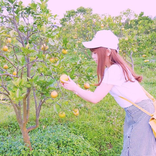 yesterday I was the real-life Harvest Moon MC; went to some fields and picked oranges 🍊—anyway whaddya think if I change my whole feed theme to those bright and highly saturated pics with heavy pink tint - like this one? please please share your thoughts on this matter! I'm torn in between keeping my old editing style (which is super clean and simple) or trying this super cute style 🍉—#WhatCarolWear#かわいい#可愛い#コーデ#コーディネート#ファッション#メイク#clozetteid#wiwt #influencer #bblogger#bloggers #beautyblogger #beautyinfluencer #influencersurabaya  #sbybeautyblogger #beautybloggerindo #influencersby#bbloggers #harvestmoon