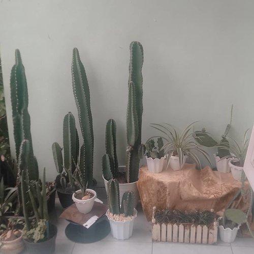 Day 6th of quarantineHallo babies....Lately kalian diluar ya karena bakal susah untuk angkut kalian untuk jemur.Terus tumbuh ya, karena saat ini kita blm bisa maksimal urus kalian....#plants #cactus #clozetteid #tanamanhias #kaktus #lflfff❤ #lfl #fff #instapic #love