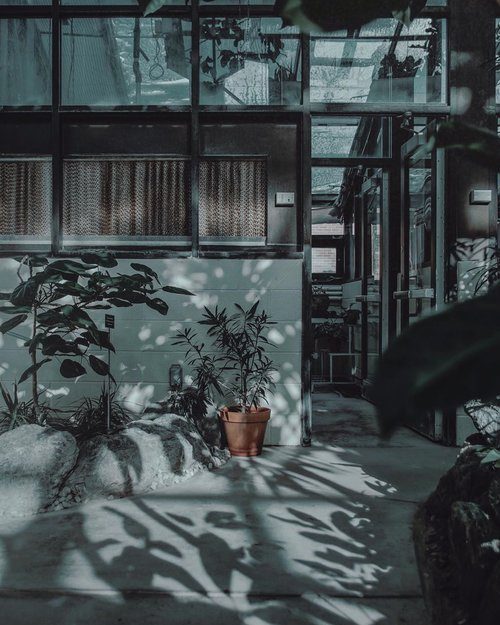FOUND ANOTHER ONE OF AESTHETIC SHOT FROM @unsplash by: HAYLEY CATHERINE. SUCH AN INSPO 🌿•Ngeliat foto ini jadi pengen deh rasanya punya satu ruangan di rumah yang konsepnya begini. Kayaknya tuh adem and sejuk gitu, what do you think?––And tell me your favorite moodboards💕••••#visualambassadors #visualdiaries #visualcreatorz #ijulifestyle #ijulifestyler #asianmen #menbloggers #bloggerindonesia #indoblogger #fashionlifestyle #reposting #visualjournaling #visualmen #reedit #lifestylebloggers #igstylediaries #igstyleblogger