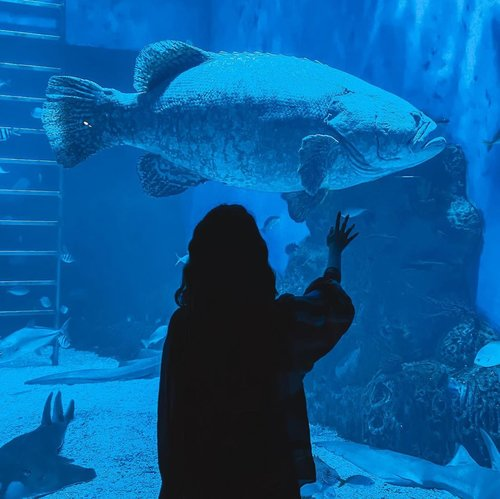 Whimsical moments shared with the gigantic fishes at @jakartaaquarium ❤️ I wonder how are these sea creatures doing right now, hope they're well taken care off and not neglected even though the Aquarium is closed for the time being // 📸 @priscaangelina ....... ..... #photooftheday #ootd #throwback  #ootdindo #wiwt #steviewears #exploretocreate #clozetteid #ootdstyle #ootdinspiration #love #lookbookindonesia #fashionblogger #style #whatiwore #stylefashion #streetfashion #streetstyle #streetinspiration #shotoniphone