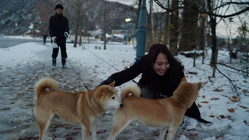 Cuddling with a couple of shiba inu. #Hachiko is also a shiba inu. Maybe they're related 🤔  #ClozetteID #Lifestyle #Travel #Traveling #Japan #Kawaguchi #kawaguchiko #shibainu #dog