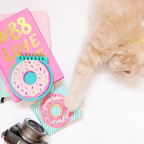 Im not blocking the view, im the view 🐱_________________________#flatlay #flatlaystyle #flatlaynation #flatlays #flatlaylove #whitetable #clozetteid
