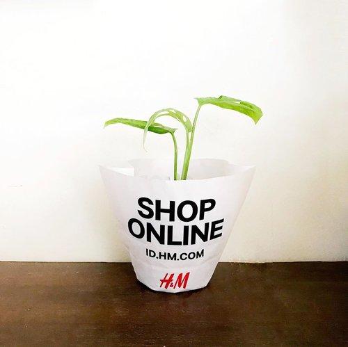Kayanya kalau ngerawatnya gampang gw suka deh bercocok tanam, buktinya gw bisa menyelamatkan si Janda Bolong yang udah somplak ini tumbuh daun-daun baru. Swipe deh dari awal banyak banget, gw gunting dan sekarang sehat-sehat dengan 3 daunnya➡️ Karena belum punya pot bagus, DIY paper bag bekas 😅-#clozetteid#plantsplantsplants