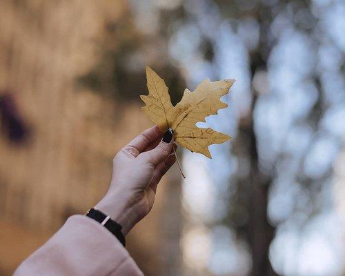 Poetry in the air 🍁 . . . . . #poem #clozetteid #travel #autumn #sydney #australia #travelblogger