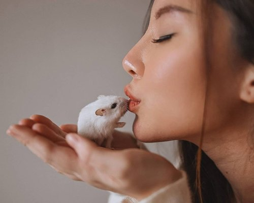 Hamster and Gretel 📸 @samseite . . . . . . #animalphotography #animallover #hamsterindonesia #hamstergram #portraits_shoot #mood #Portraiture #animals #fotd #ClozetteID #faceoftheday