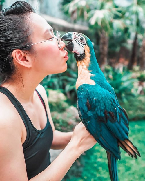 my baby macaw, Joshfrom @vaniie_parrot the best petshop ♡also big thanks @carolinmalie for capturing my moment with Jojos•••••••#clozetteid #makersgonnamake #visualgang #mycolorfullife #verilymoment #littlestoriesofmylife #momentsofmine #goopgo #kakatua #kakatuaindonesia #paruhbengkok #paruhbengkokindonesia #pecintaparuhbengkok #macawsofinstagram #macawindonesia #macawlover #parrotsofinstagram #stayinspired #stayhome #dirumahaja
