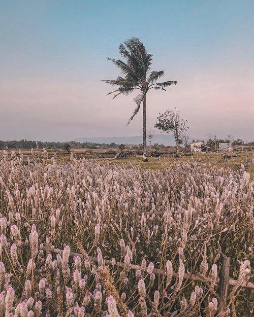 "🌴 ""At the end of the #roadtrip your feet should be dirty, your hair messy, and your eyes sparkling... ""🌴.#fieldview #mothernature #earthpix #thisisjogja #explorejateng #yktripdiary #weekendgetaway #sheisnotlost #clozetteid......#jogjaiswonderful #indonesiaku #beautifuldestinations #goplayoutside #openmyworld #stayandwander #travelogue #naturelover #dametraveler #darlingescapes #girlsthatwander #sheexplores #piknikdong #wonderfulplaces #shotoniphone #travelersnotebook #travelgram #letsgosomewhere #visualwanderlust #postcardsfromtheworld"
