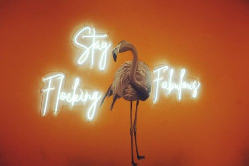 "Good night ""Stay Flocking Fabulous"" 🦑(maap ga ada emoticon flamingo)  _________ #beauty #carnellinstyle #love #bird  #motd #lotd #ootd #photooftheday #photography #lookoftheday #lifeinJakarta #life  #hello  #lookbook #style #styleoftheday #ClozetteID #quote  #fabulous  #restaurantdesign #pink"