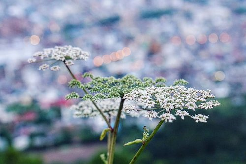 View from above.  Have a pleasant evening everyone. The sun is setting now, it's time for a night out or dinner with your love ones before tucking in for the night.  #view #evening #flower #summerflower #love #hakodate #summerholiday #hokkaido #japan #mountainview #beauty #triptoJapan #clozetteID