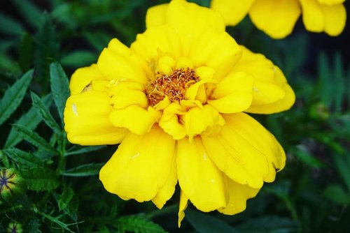 Belakangan berasa kalau dress dengan warna tone bright yellow gini cantik deh. Seger banget dan bikin aura kita 'cerahan' 😁#brightyellow #yellow #yellowflower #nature #clozetteID #beauty #love #summervacation #Japan #summerholiday #Hokkaido #pleasure