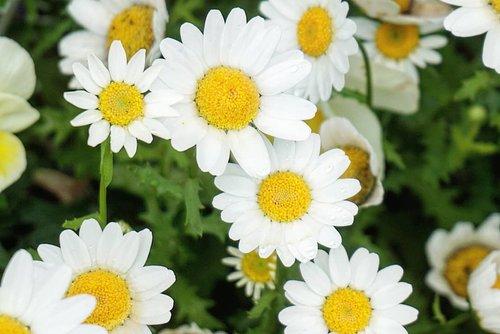 Tomorrow is Friday 😁This week went on pretty fast I say. #flower #daisy #beauty #Japan #travel #letsgo #hokkaido #clozetteID #laketoya #summervacation