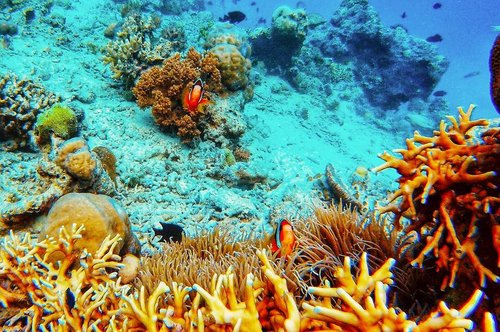 Can you spot how many clown fish in this photo? Yang jawabannya bener dapet give away oleh-oleh dari Banyuwangi. 😁 . . . . . #underwater #snorkeling #sports #watersports #coralreef #pulaumenjangan #bali #travel #travelgram #instatravel #blogger #travelblogger #gopro #session #vsco #instadaily #clozetteid