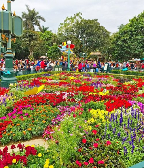 Throwback to spring time in Hong Kong Disneyland #spring #springtime #flowers #garden #gardening #disneyland #disneylandhk #disneylandhongkong #hongkong #travel #travelling #traveller #travelidea #travelstyle #igtravel #holiday #holidaymood #colorful #clozetteid
